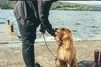 adoptowany pies nad wodą z panem