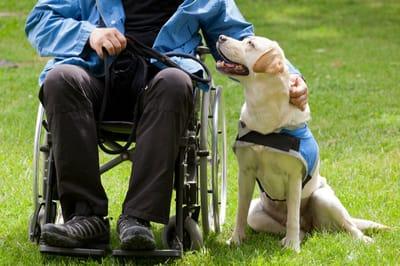 pies przewodnik osoby na wózku
