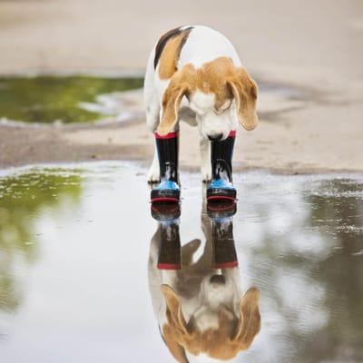 pies-w-kaluzy
