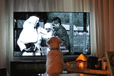 pies-przed-telewizorem