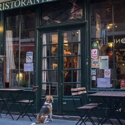 pies pod restauracją