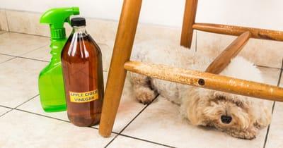 Spray na psa