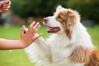 sztuczki dla psa