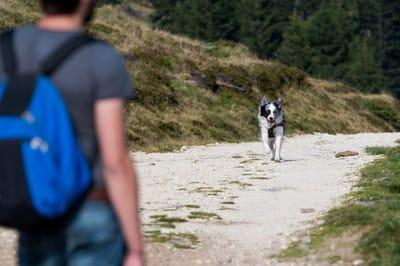 pies biegnie do właściciela