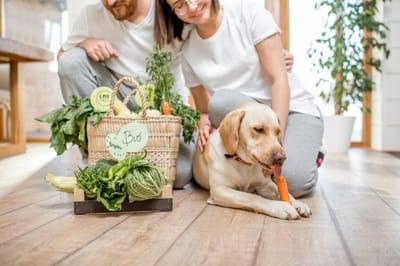 pies je warzywa