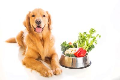 warzywa dla psa