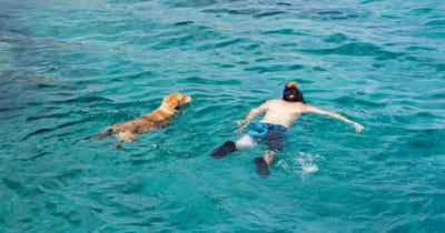 cane nuota insieme al padrone