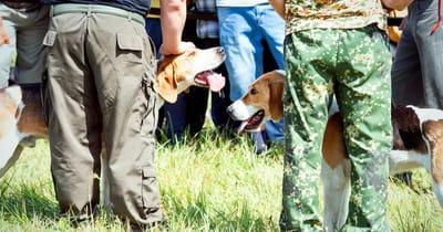 due cani si incontrano tra la folla di umani