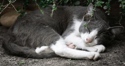 Kat slaapt op afgelegen plek
