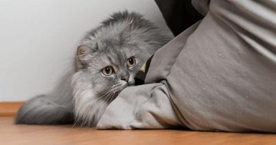 Kat verstopt zich