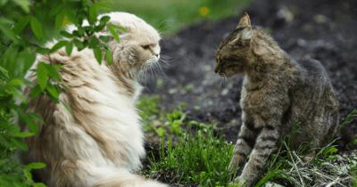 Katten in tuin