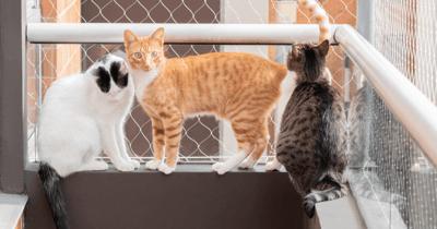 Katten op balkon met gaas