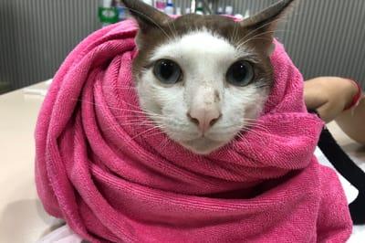 kot chory na białaczkę