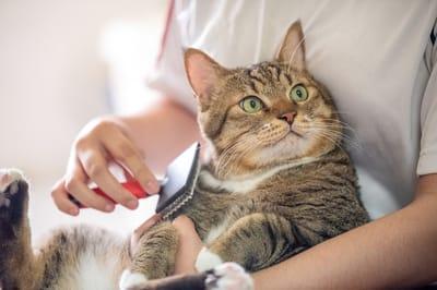 czesanie kota