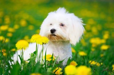 mały pies sennik