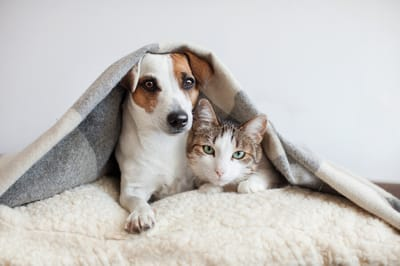 pies i kot sennik