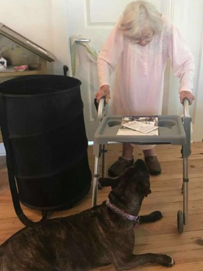 abuela en andador y perra