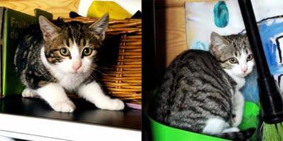 i-due-gattini-bianchi-e-tigrati-da-adottare