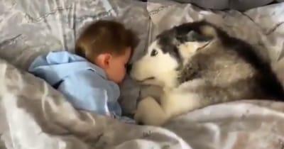 bebe durmiendo y husky mirando