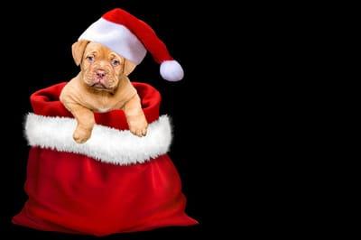 Regalar perro Navidad