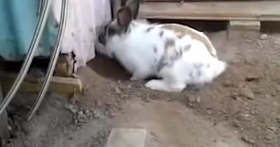 conejo ayudando a gato
