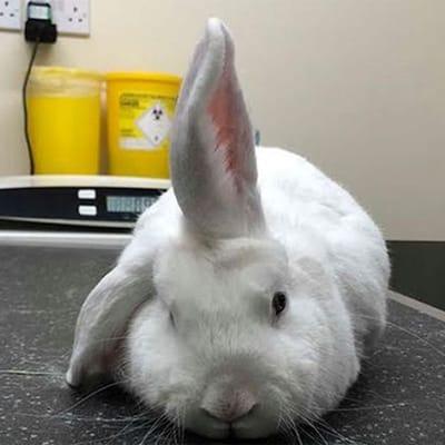 conejo unicornio