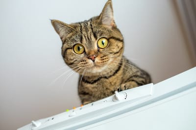 gato productos toxicos