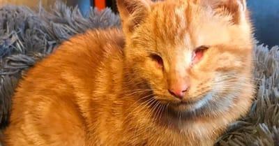gato sin ojos