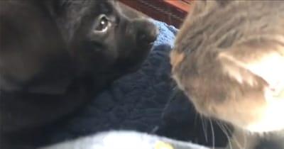 gato besa al perro
