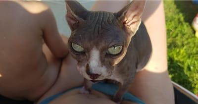 gato esfinge djoon