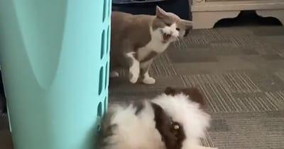 gato enfadado y perro