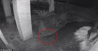 gato fantasma captado cámara vigilancia
