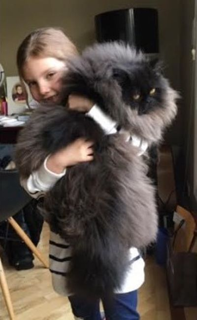 niña con gato gigante en los brazos