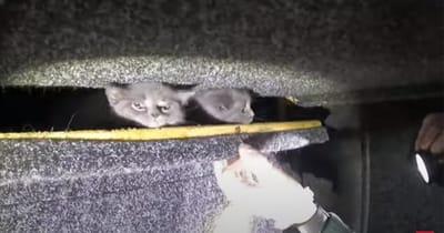 gatos escondidos en el doble fondo de un autobus