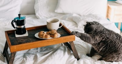 gatto-grigio-interessato-dalla-colazione-sul-vassoio