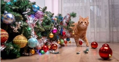 gatto-rosso-scappa-dopo-aver-fatto-cadere-lalbero-di-Natale