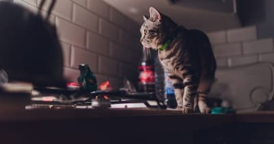 gatto-tigrato-vicino-ai-fornelli-di-notte