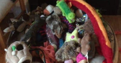 juguetes para perro pastor aleman
