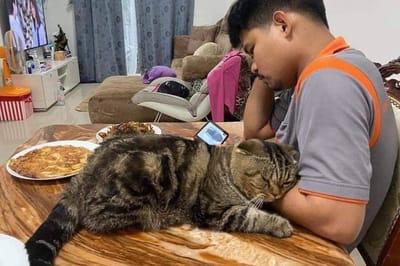 kot i mężczyzna