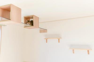 pokoj dla kota