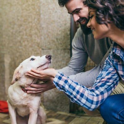 pareja joven y perro en refugio
