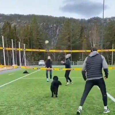 perro esperando el balon