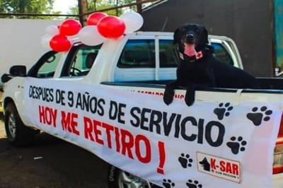Perro Heróico se Jubila. Foto: Facebook / Unidad K-sar Cruz Roja