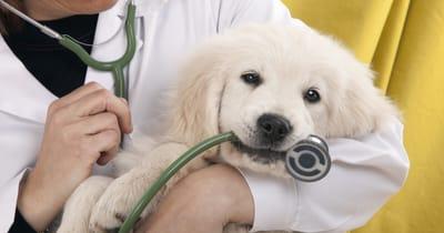 koszt utrzymania psa