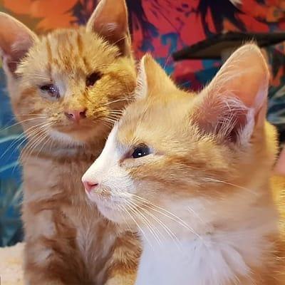 reencuentro gatos