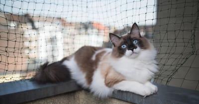 siatjka na balkon dla kota