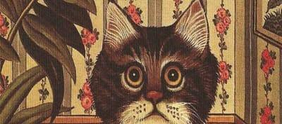 portada soy un gato libro