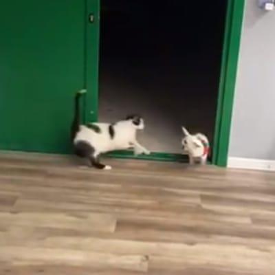 susto gato a perro