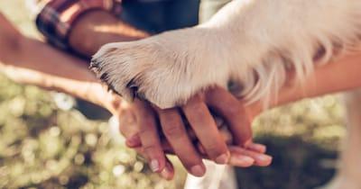 union manos y pata
