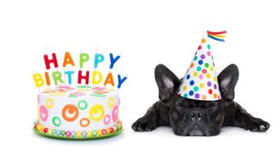 urodziny psa